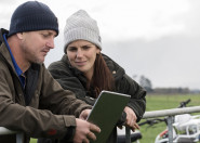 Two farmers at farm gate looking at ipad